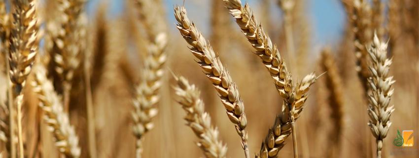 الزراعة في الحضارة الإسلامية