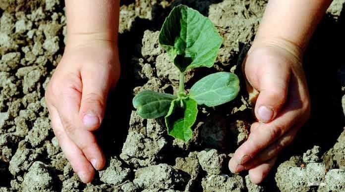 حث الإسلام على زراعة النبات
